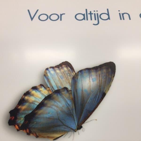 UV print van een vlinder op solid surface